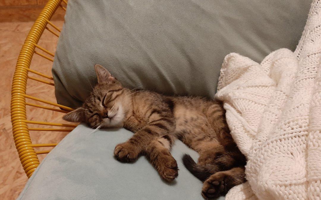 Dostala som mačiatko a s ním prišla aj moja transformácia vedomia